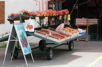 Bodensee Erdbeeren