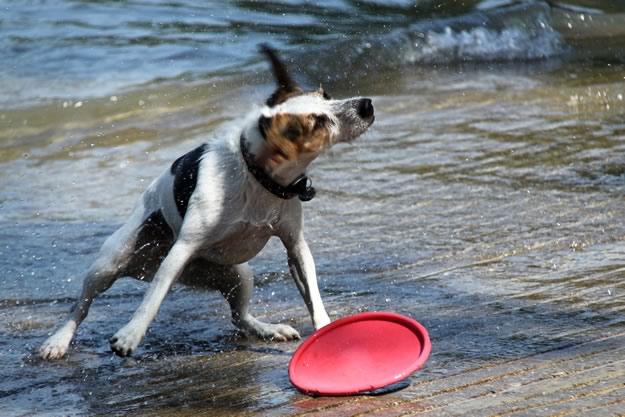 Hund am Bodensee