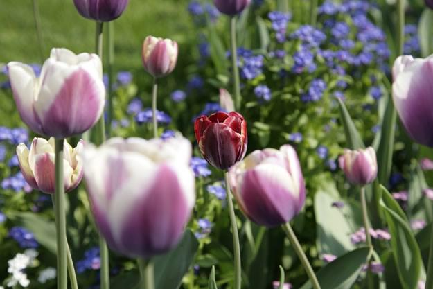 Gartentag am Bodensee