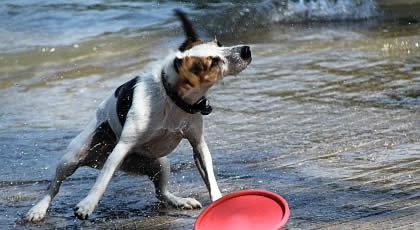 Urlaub Mit Hund Am Bodensee Ferien